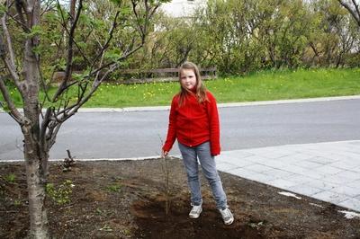 Skógrækt í maí 2010